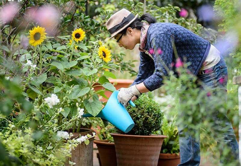 دلیل آبیاری منظم گل باغچه