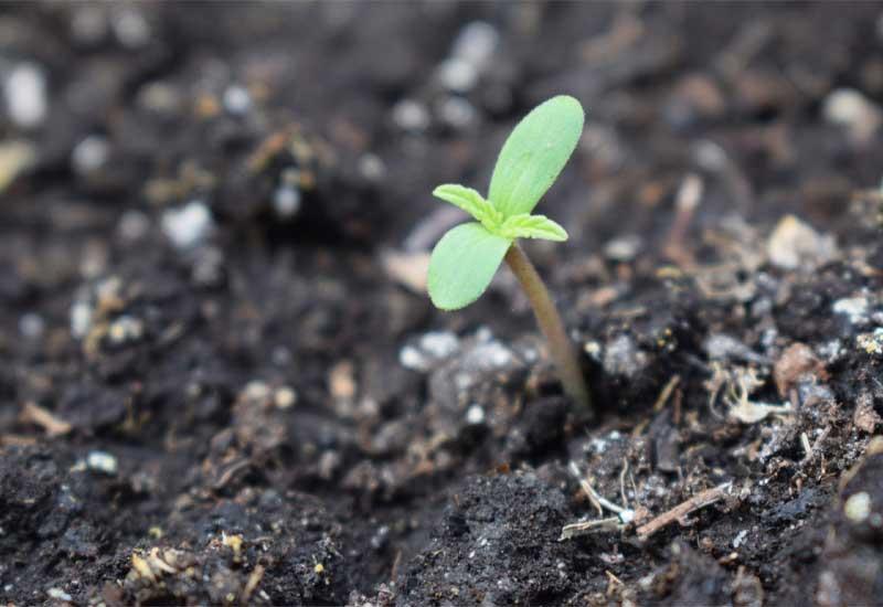 تاثیر کود مایع بر گیاه