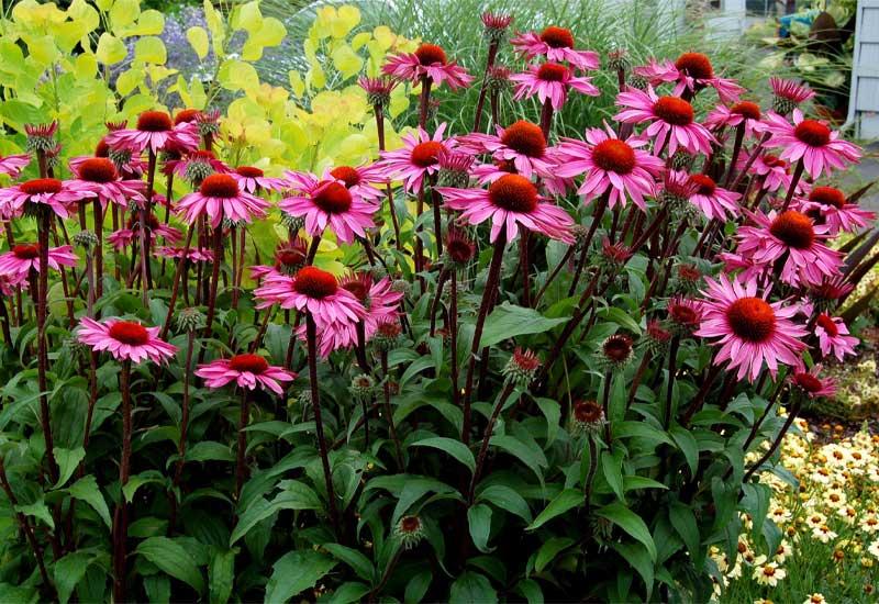 تعویض خاک گل باغچه