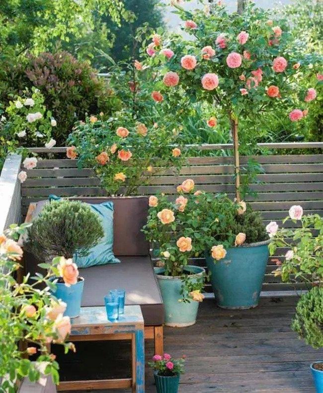 نگهداری گل رز آپارتمانی