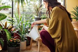 آبیاری گیاهان آپارتمانی در سفر