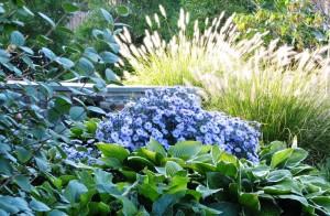 آستر - گل ستاره - سبزآفرین