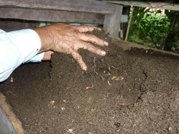 بستر ورمی کمپوست سهم ورمیکمپوست کشاورزی ارگانیک